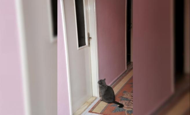 Gamze kazada öldü, kedisi kapısından ayrılmıyor