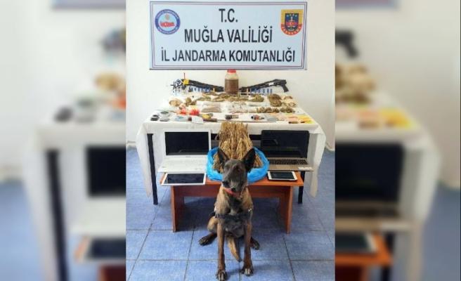 Bodrum'da uyuşturucu operasyonu: 13 gözaltı