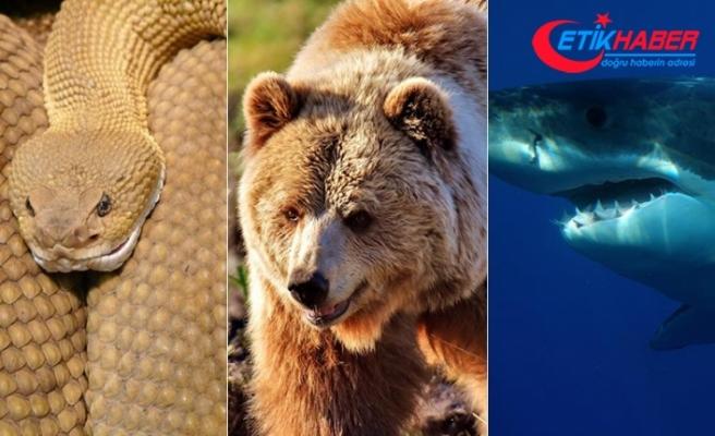 Önce yılan sonra ayı ve köpek balığı saldırdı