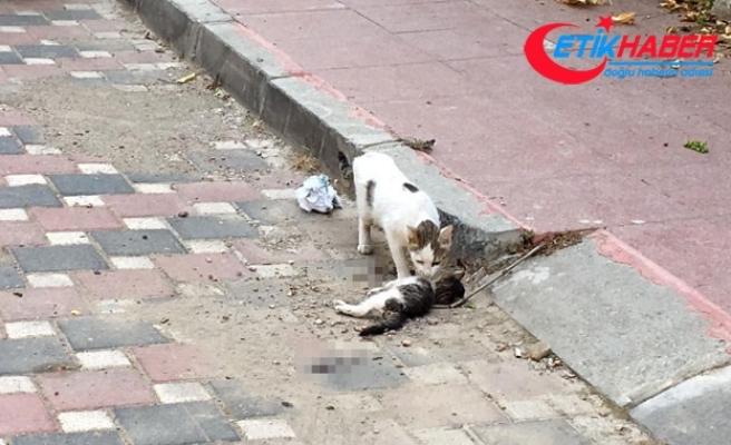Anne kedi, ölen yavrusunun başından saatlerce ayrılmadı