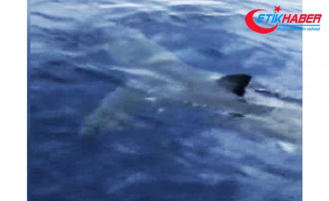 Bodrum'da dev köpek balığı görüntülendi