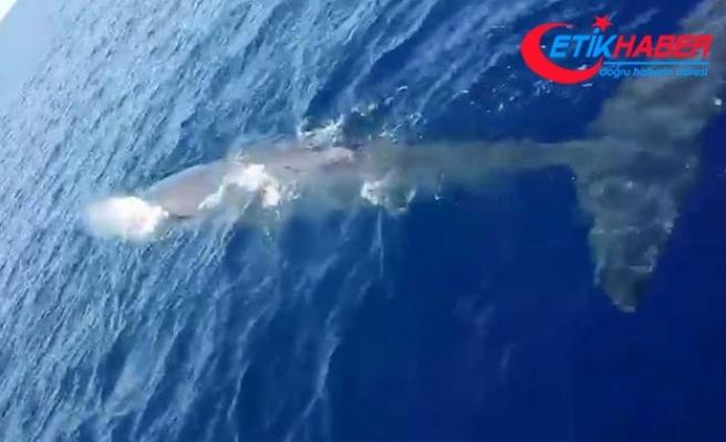 Fethiye açıklarında balina görüntülendi