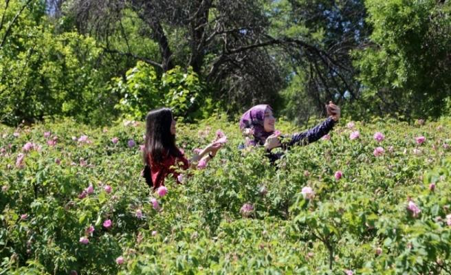 Gül bahçeleriyle nüfusunun 10 katı turist çekti