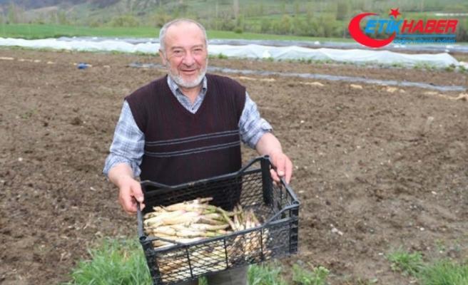 Köyüne dönen gurbetçi kuşkonmaz üretimine başladı