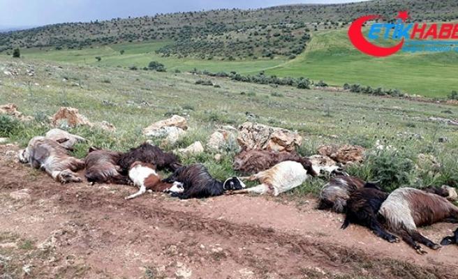 Mardin'de yıldırım çarpan çoban ağır yaralandı