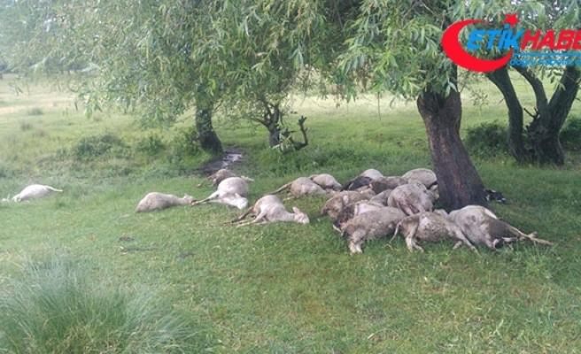 Simav'da yıldırım düşmesi sonucu 23 küçükbaş hayvan telef oldu
