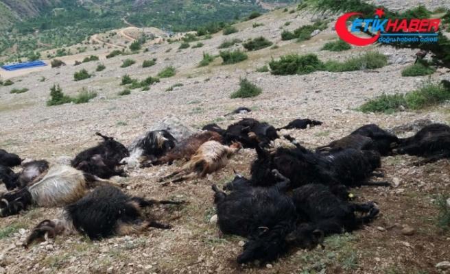 Yıldırım düştü: 32 keçi telef oldu
