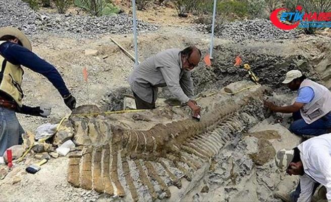 Çin'de 174 milyon yıllık dinozor fosili bulundu