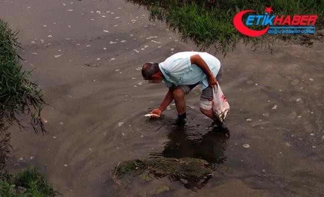 Düzce'de derede balık ölümleri şüphe yarattı