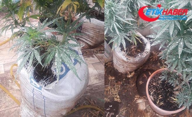 Villanın terasında uyuşturucu üretimine 2 gözaltı