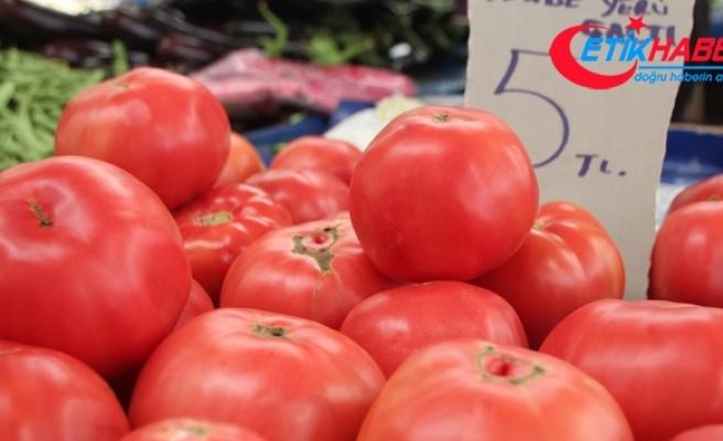 Yerli domates satışa sunuldu