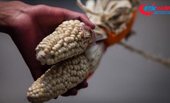 Tarım ilaçları üreticisi Monsanto'ya 289 milyon dolar tazminat cezası