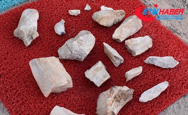 10 milyon yıl önce yaşamış fil fosillerini çoban buldu
