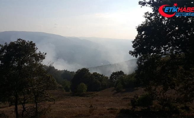 Bolu'da orman yangını