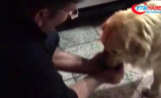 Susayan köpeğe polis şefkati