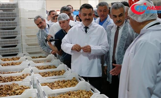 Tarım ve Orman Bakanı Bekir Pakdemirli incir işleme tesisini gezdi