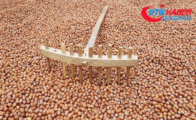 Üreticiden 12 liraya alınan fındık işlenip, 60 liraya satılıyor