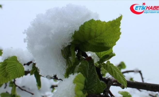 Kar yağışı fındık üreticileri ve ihracatçılarını sevindirdi