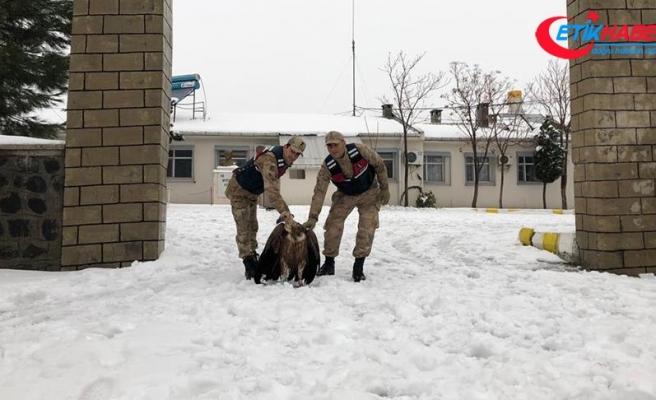 Mehmetçik yaralı akbabayı donmak üzereyken buldu