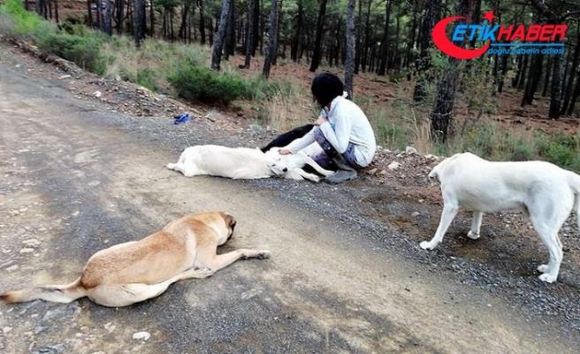 Sakinleştirici ilaç verilen 11 köpeğin sokağa bırakılmasına soruşturma