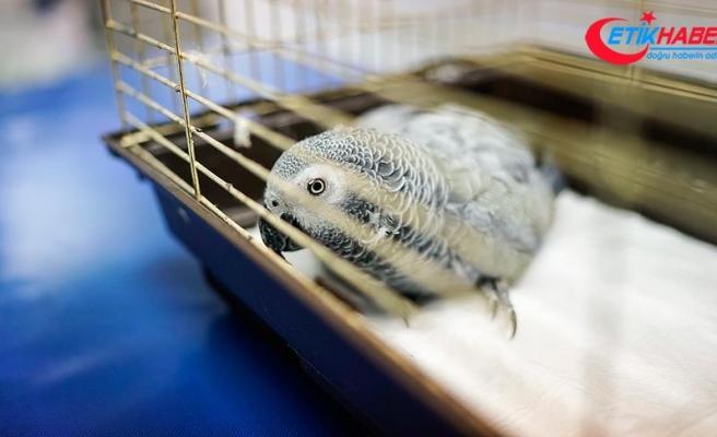 Şiddete uğrayan papağan öldü