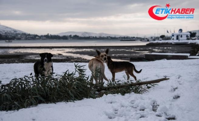 Avrupa'da soğuk hava 13 ölüme neden oldu