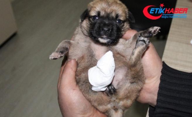 Ayağı ve kuyruğu kesilmiş yavru köpek buldu