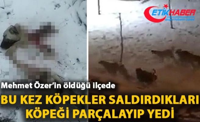 Liselinin öldüğü ilçede, bu kez köpekler saldırdıkları köpeği parçalayıp yedi