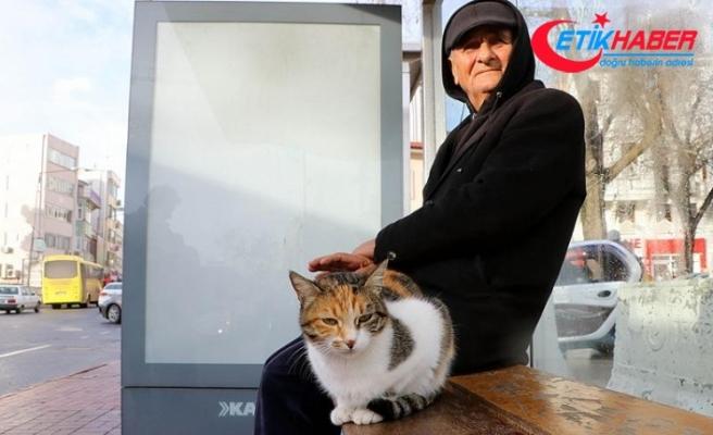 Otobüs durağı, kedilere yuva oldu