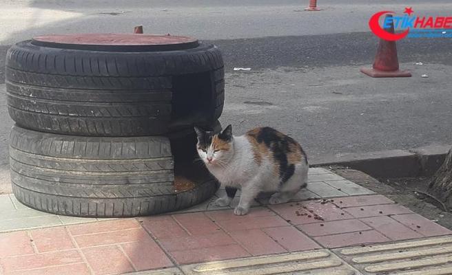 Otomobil lastiklerinden kedilere yuva yaptı