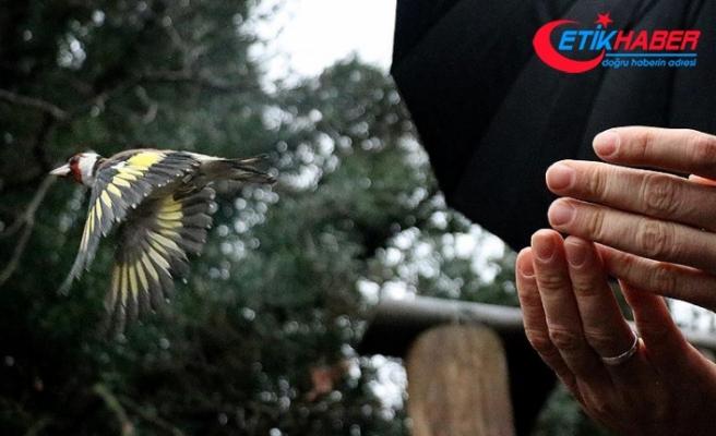 Satılmak üzereyken el konulan 515 yabani kuş yeniden doğaya salındı