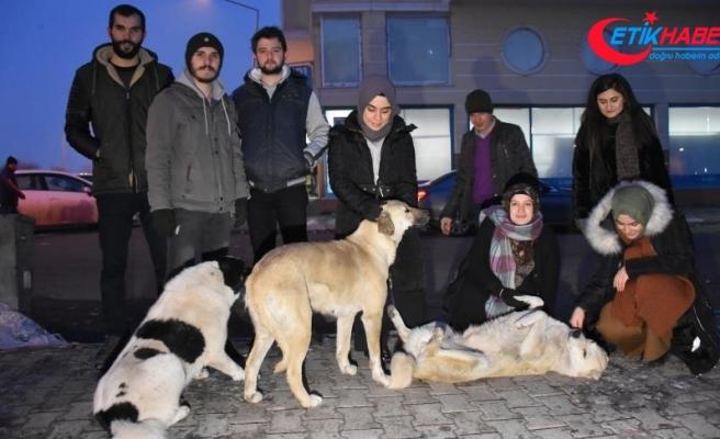 'Soğuk patiler' sokak hayvanları için seferber oldu