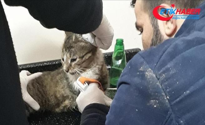 Sosyal medya fenomeni kedi 'Yeşim' öldü