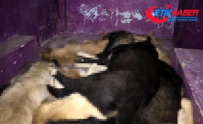 '12 köpek zehir verilerek, telef edildi' iddiası