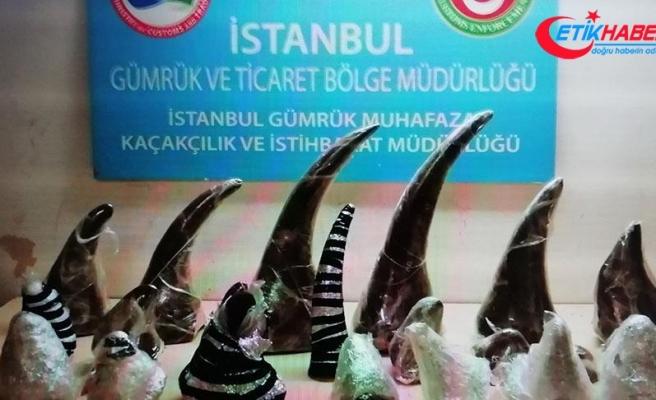 Atatürk Havalimanı'nda 21 gergedan boynuzu ele geçirildi