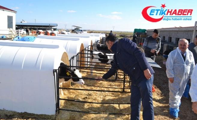 Devlet desteğiyle günde 3 ton süt üretiyor