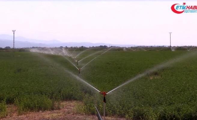 Elektrikte 'tarımsal faaliyetler tarifesi' bir aya kadar başlıyor