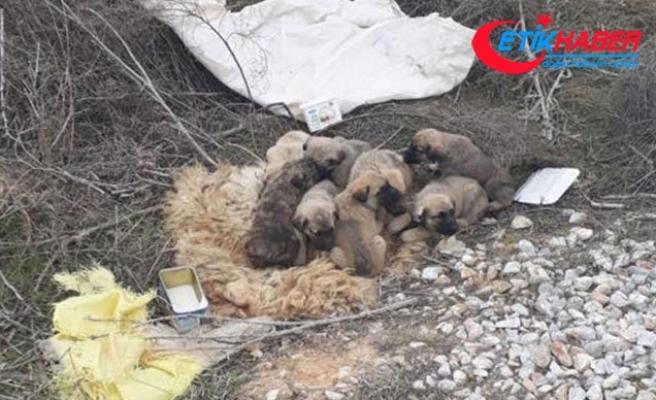 9 yavru köpeği çuvala koyup ölüme terk ettiler
