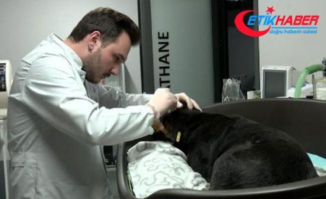 Havlama sesinden rahatsız olduğu köpeği başından vurdu