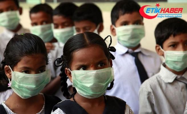 Hindistan'daki domuz gribi salgını 3 ayda 605 can aldı