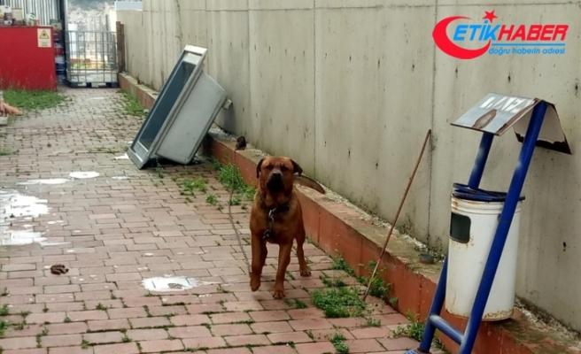 İş görüşmesine giden kadına köpek saldırdı