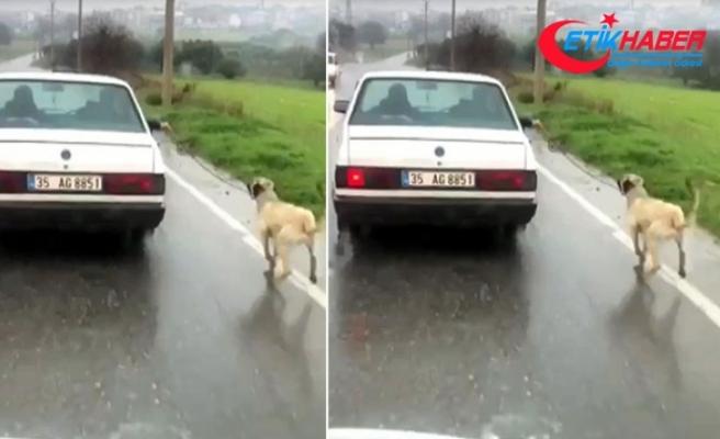 Köpeğini otomobile bağlayıp kilometrelerce koşturan sürücü hakkında işlem yapıldı