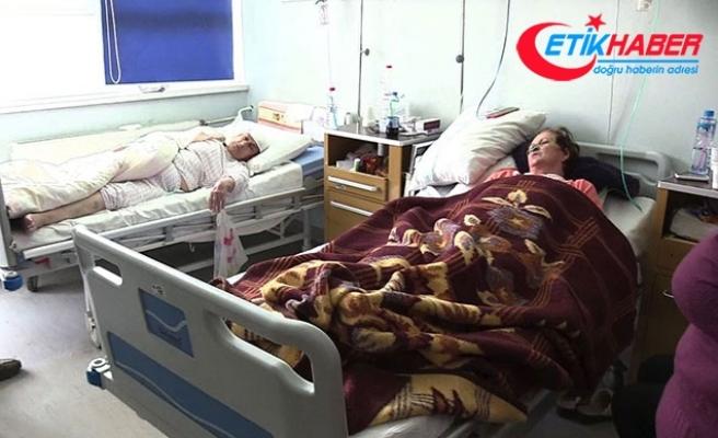 Kosova'da domuz gribinden 11 kişi hayatını kaybetti