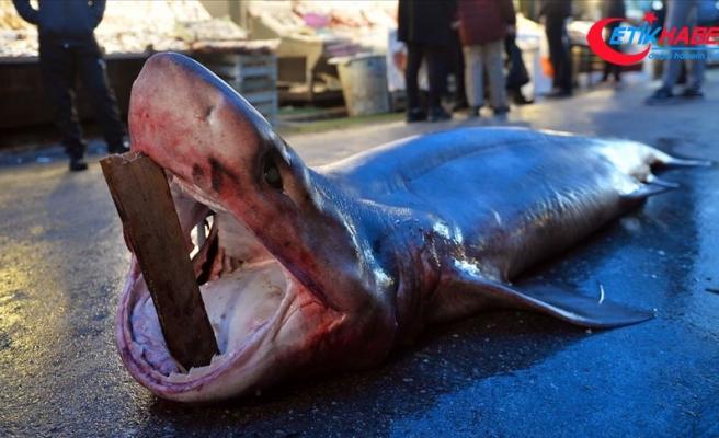 Mersin'de 4 metre uzunluğunda köpek balığı yakalandı
