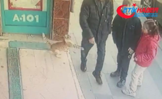 Sosyal medyada fenomen olan kedi Bayrampaşa'da çıktı