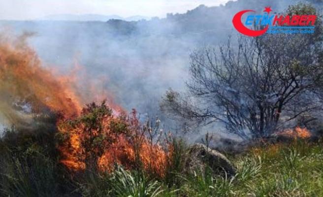 Ayvalık'ta zeytin ve meyve ağaçları yandı