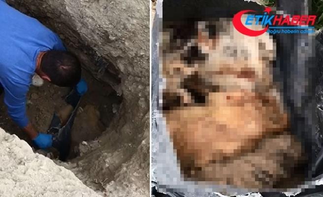 Burdur'da barınak yakınındaki çukurlarda kedi ve köpek ölüleri bulundu