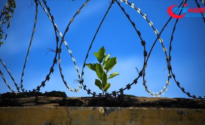 'Dünyada ölüm cezası uygulamaları yüzde 31 azaldı'