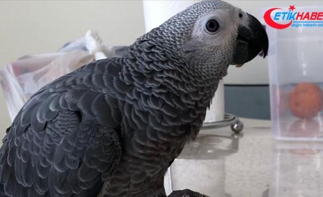 Kayıp papağanları 'Cango'yu bulana 2 bin lira ödül