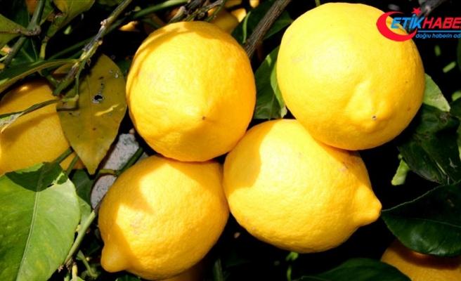Meteorolojik verilerle rekolte tahmini limonla başladı